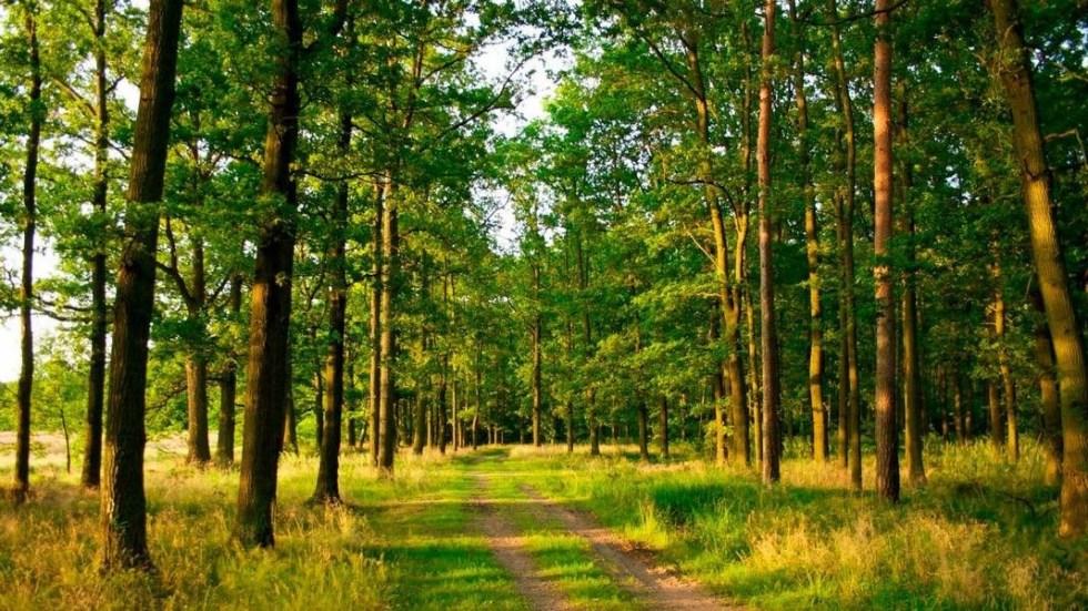 Прогулка по лесу. Простой, но точный психологический тест